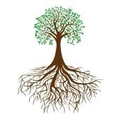 13610589-arbre-avec-des-racines-et-le-feuillage-dense